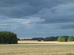 пшеница мяг.фуражная