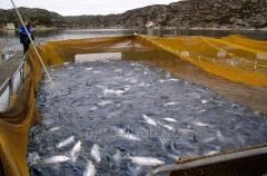 Премиксы для рыбы