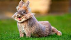 Премиксы для кроликов, премиксы для пушных зверей