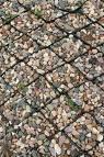 Geolattices