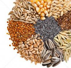 Seeds of oil-bearing crops