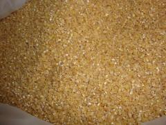 گندم از غلات