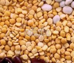 Grain pea