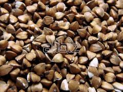 Grain buckwhea