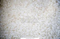 Рис камолино
