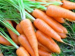 Морковь (шантане роял)
