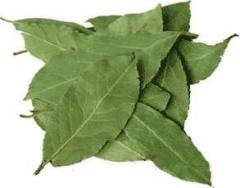 Sale of bay leaf. Wholesale