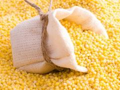Fodder corn (fodder)