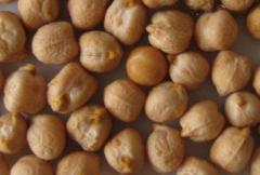 Chick-pea seeds