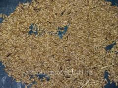 Grain of oats fodder, in bulk, production of RK, 1