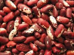 Haricot seeds
