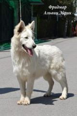 Щенки Белой Швейцарской Овчарки в Алматы