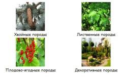 Saplings in Astana