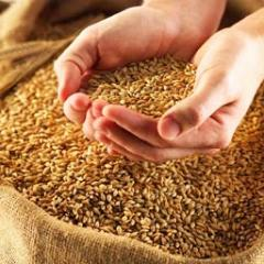 Wheat food 3rd class. Wholesale. Export from