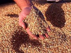 Durum wheat. Export from Kazakhstan