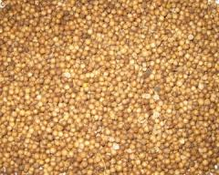 Safflower from the producer. Export from