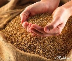 Продаем на экспорт зерновые и масличные культуры