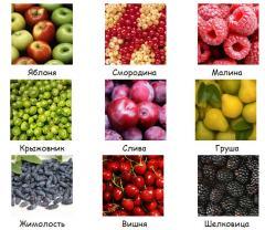 Seedlings of fruit