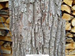 Firewood dry in Astana