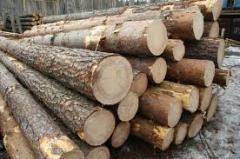 Wood construction fir-tree
