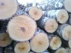 Sawlog birch of the Altey.kz company