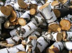Raw materials wood birch of the Altey.kz company