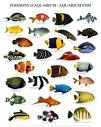 Akvaryum / süs balıkları