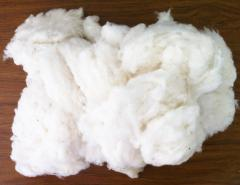 Cotton wool white kipny