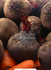 Beet wholesale. We accept preliminary