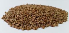 Buckwheat 1 grades (unground buckwheat)