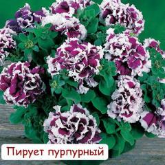 Petunia in Astana!