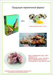 Egg quail, carcasses of quails