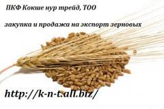 Ячмень закупка в Казахстане