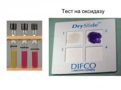 Test For the Oxidase of 50 Disks (Fluka 70439)