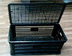 Box black for transportation of a bird, rabbits,