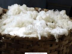 Cotton from Kazakhstan