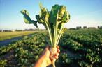 Средства защиты растений химические Гербициды