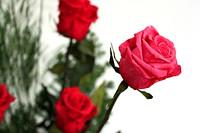 Букет в стеклянной вазе. Розы стандарт красные,