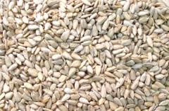 Семена подсолнечника очищенные. Экспорт. Качество
