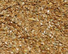 Лен масличный оптом от 500тн