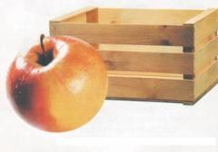 Container under fruit Boxes from the tree for frui