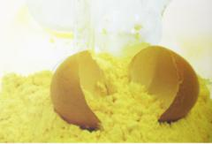 Порошок яичный в Алматы,  Казахстане
