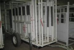 The veterinary equipment for blood sampling at