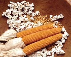 Кукуруза для попкорна, Попкорн