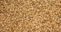 Пшеница четвертого класса. Экспорт из Казахстана