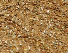 Flax oily wholesale. Export from Kazakhstan