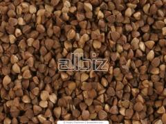 Buckwheat unground buckwheat quick-cooking 1st