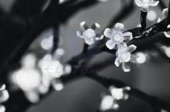 LED tree the Oriental cherry, a vystota 2,4m, a