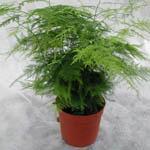 Растения другие садовые