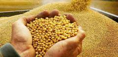 Soy, beans the price, beans to buy beans